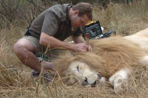 Jason-Turner-and-lion