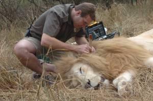 Jason-Turner-and-lion